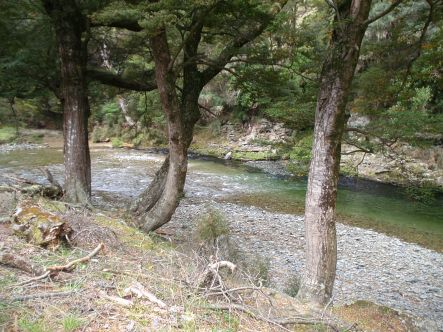 The Pomahaka River to the South of Lumsden is a tributary of the large Clutha River and can have sch