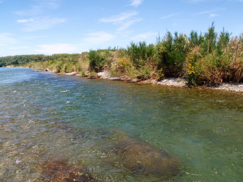 The Oreti River is famous as a wild brown trout hatchery.
