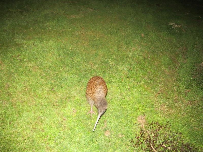 Kiwi on site at night