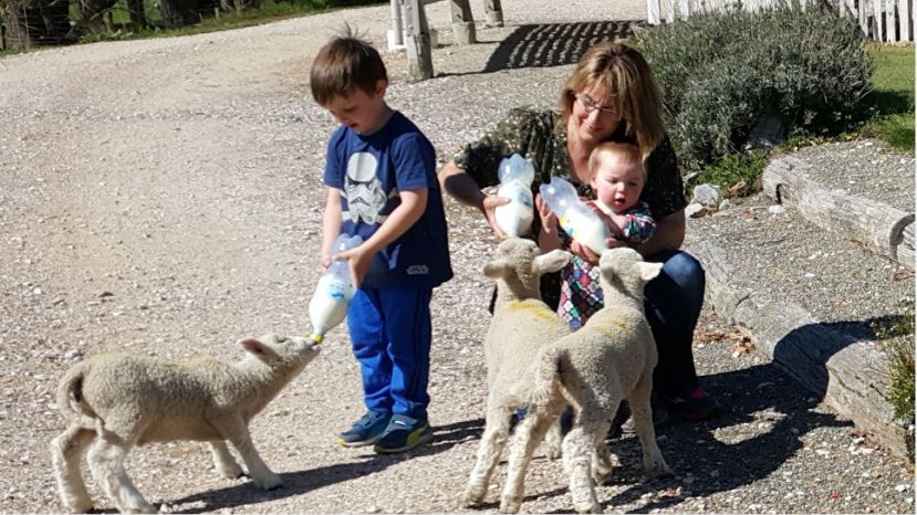 Feeding the pet lambs